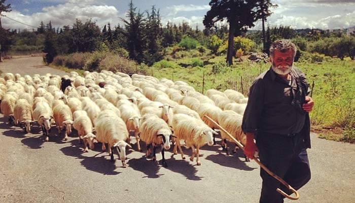 Местный житель деревни Гавалохори на Крите