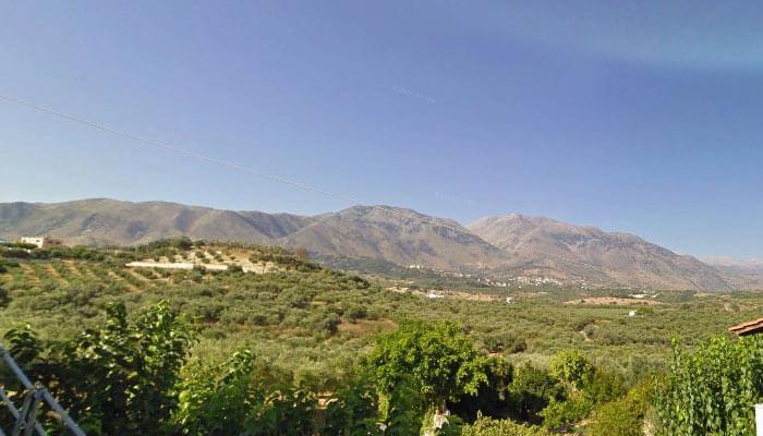 Оливковые планцации в поселке Эпископи на Крите