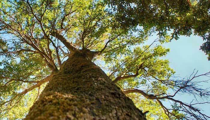 Деревья в лесу Рувас на Крите