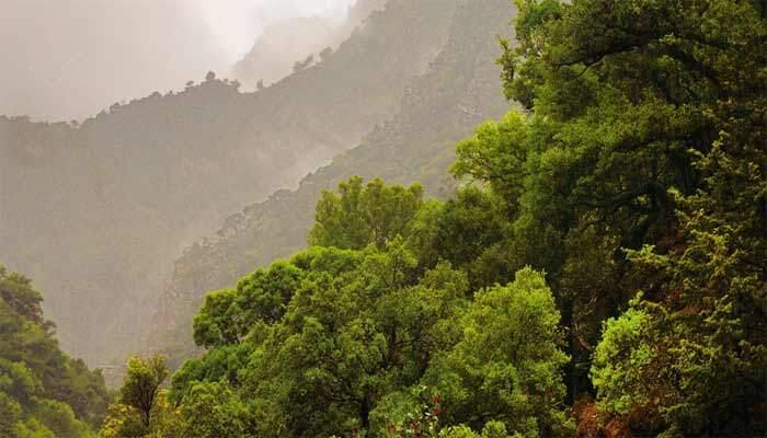 Лес Рувас в тумане на Крите