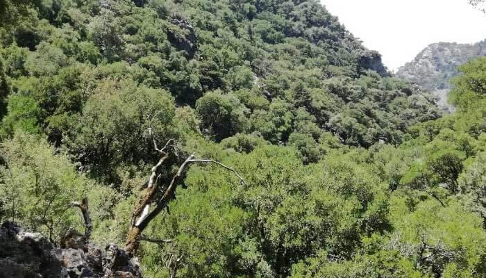 Ущелье и лес Рувас на Крите