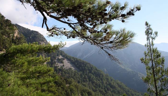 Самарийское ущелье возле деревни Хора Сфакион на Крите