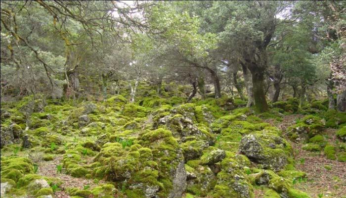 Лес Крустас в нома Лассите на Крите